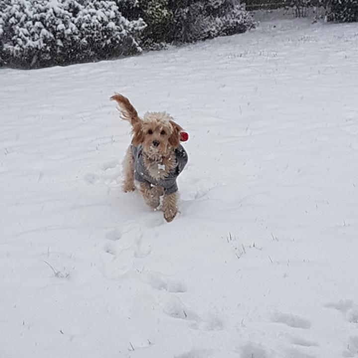 Luna in the snow